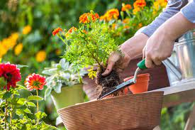 3 Common Gardening Mistakes: What are they and how to avoid them?