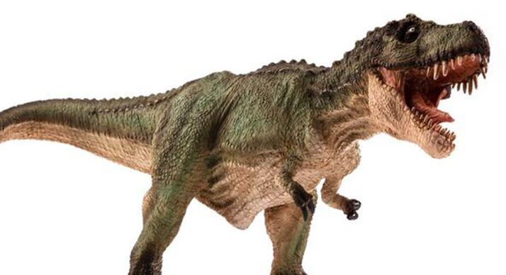 Image result for rex